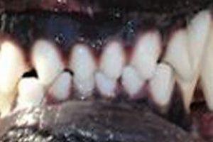 denti_sl
